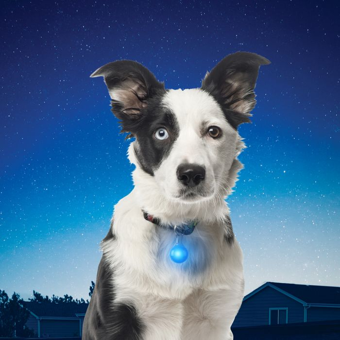 SpotLit™ Collar Light - Blue