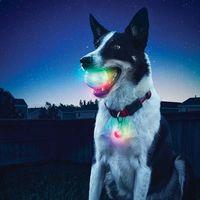 GlowStreak™ LED Ball / SpotLit™ LED Collar Light - Disc-O