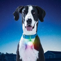 SpotLit™ XL Rechargeable Collar Light - Disc-O Select