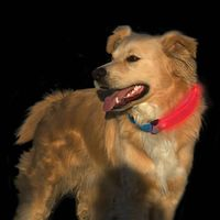 Nite Dawg® LED Collar Cover - Pink